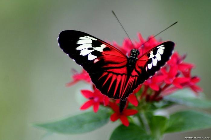 ЕГЭ - картинки с цветами и бабочками . . 2014