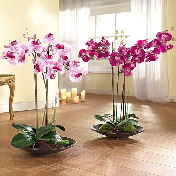 Комнатная орхидея цена