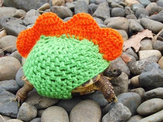 черепаха фото 1 (560x420, 242Kb)