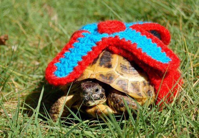 черепаха фото 3 (680x471, 403Kb)