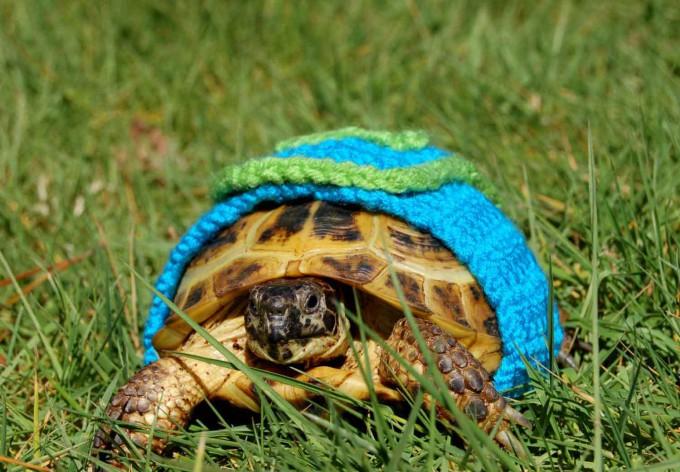 черепаха фото 4 (680x472, 364Kb)
