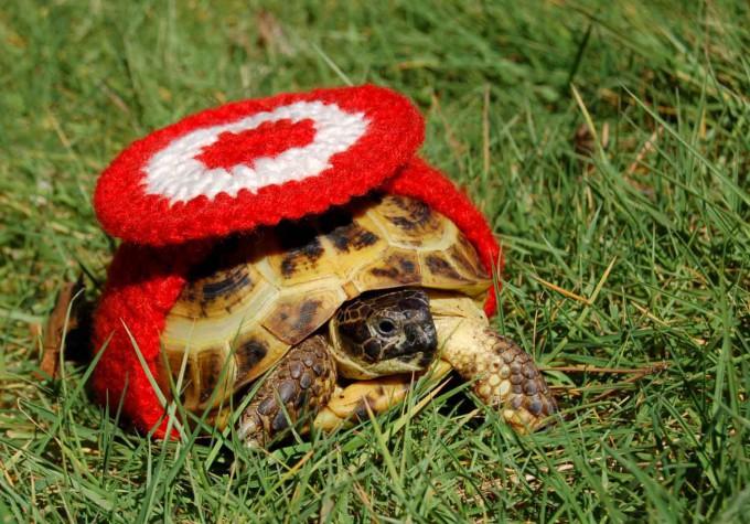 черепаха фото 5 (680x475, 418Kb)