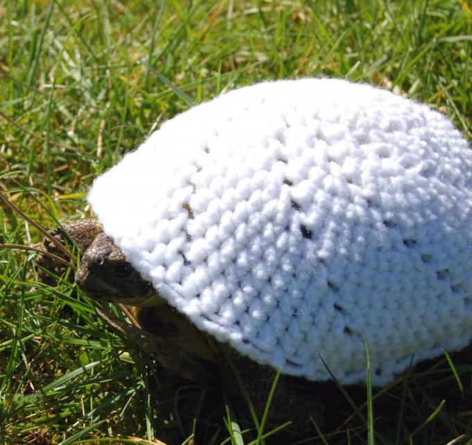 черепаха фото 7 (680x641, 395Kb)