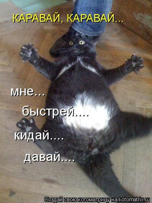 1374323496_kotomatrix_14_1 (525x700, 190Kb)