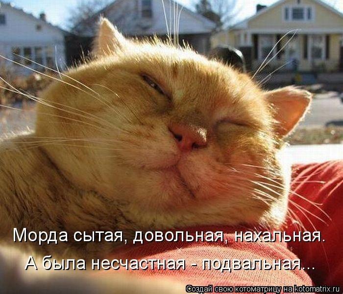 http://img1.liveinternet.ru/images/attach/b/4/103/248/103248543_1374323581_kotomatrix_25_1.jpg