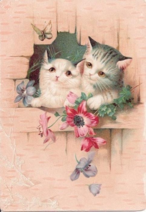 Живые открытка на 8 марта с кошками