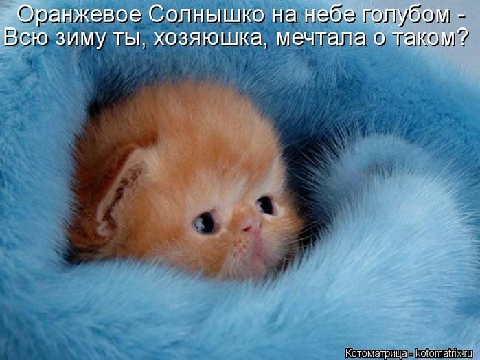 kotomatritsa_Gc (700x524, 250Kb)