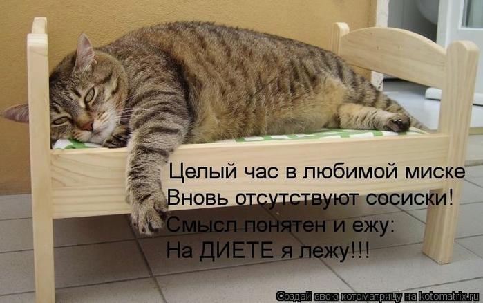 kotomatritsa_N_ (700x438, 215Kb)