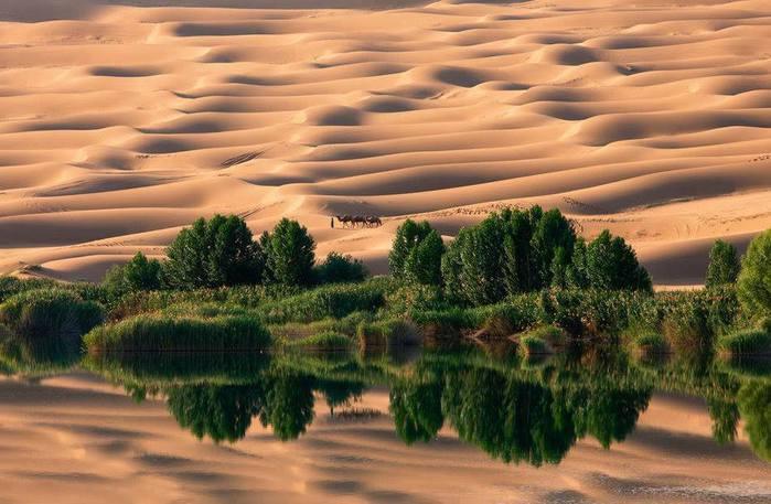 Оазис, Сахара (700x457, 55Kb)