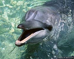 Дельфин (250x200, 43Kb)