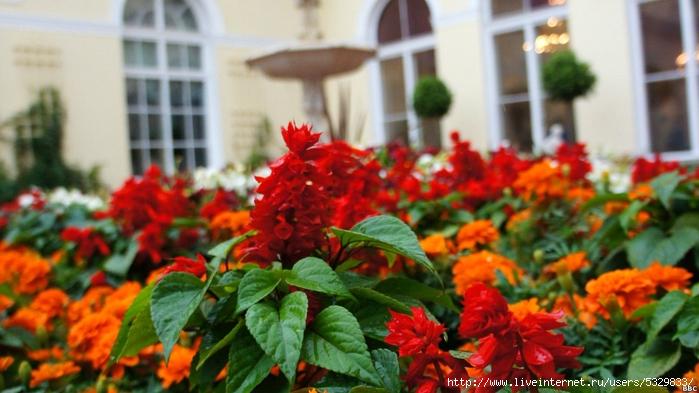 120727132052_hanging_gardens_of_hermitage_6_976x549_bbc (700x393, 224Kb)