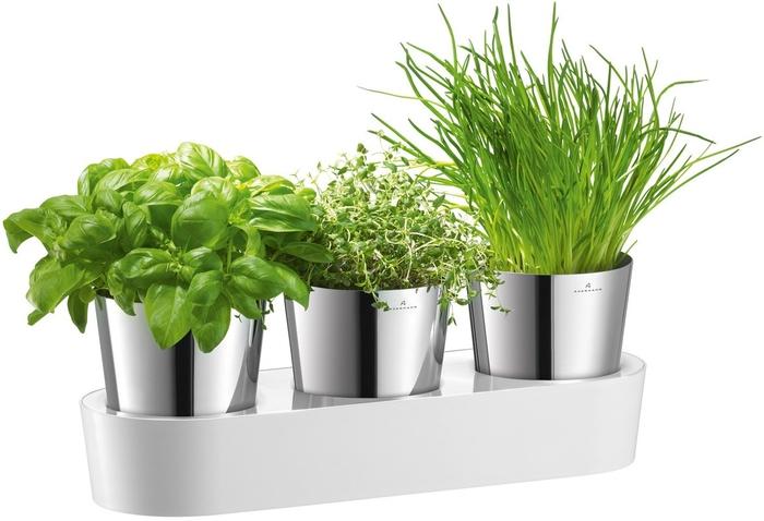 herbs (700x478, 158Kb)