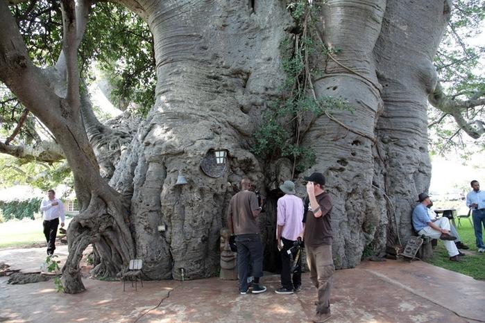 sunland_baobab_03 (700x466, 302Kb)