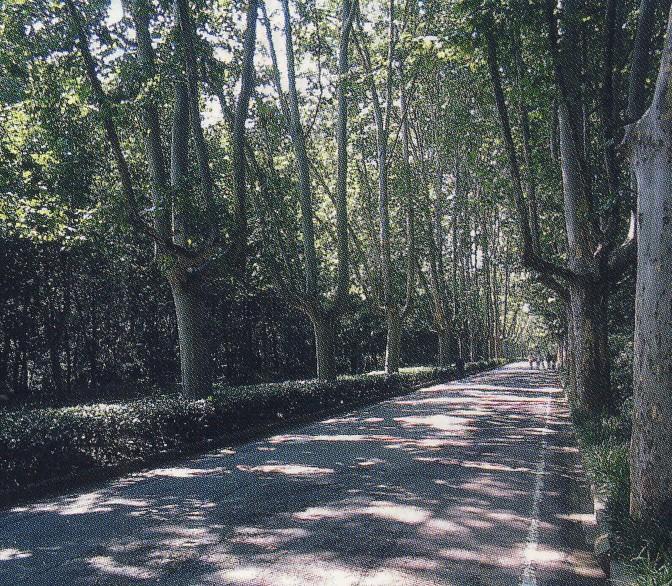 парк (672x586, 240Kb)