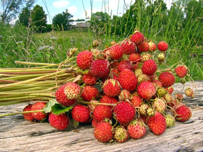 Целебные и полезные летние ягоды!