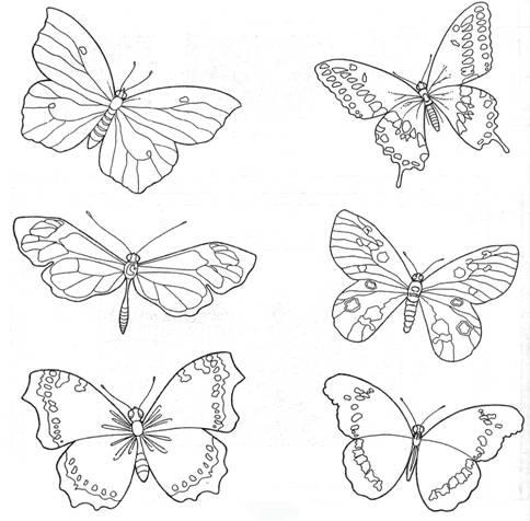 бабочки рисунки фото картинки
