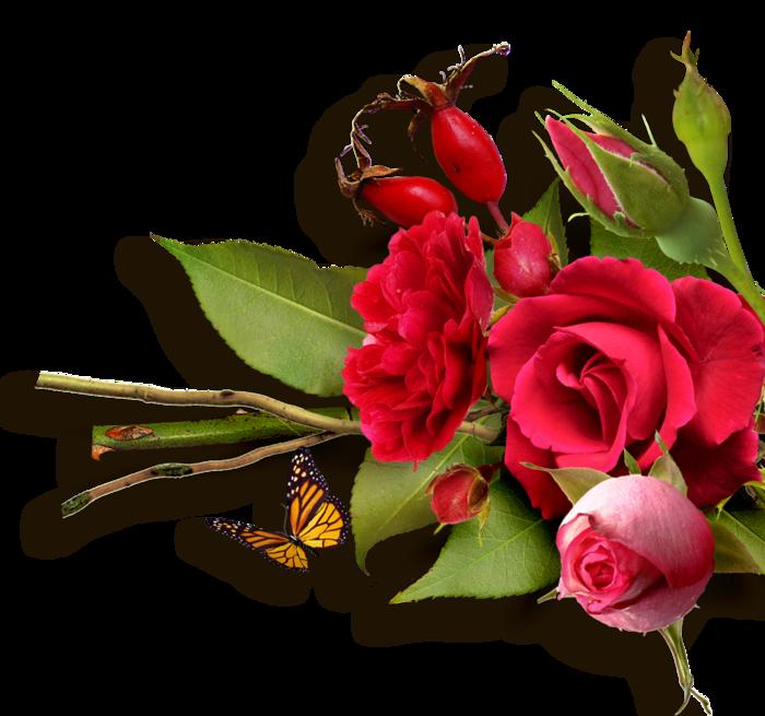 http://img1.liveinternet.ru/images/attach/b/4/103/415/103415687_RR_RoseGarden_SideCluster__8_.png