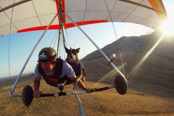 шэдоу пес дельтапланерист фото 2 (600x400, 126Kb)