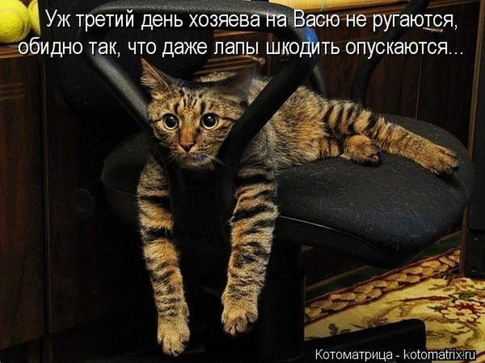 1374915222_kotomatrix_19_1 (700x525, 189Kb)