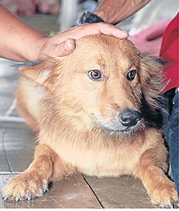 В Таиланде собака спасла1 (594x700, 269Kb)