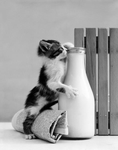 смешные фото кошек 2 (474x604, 71Kb)