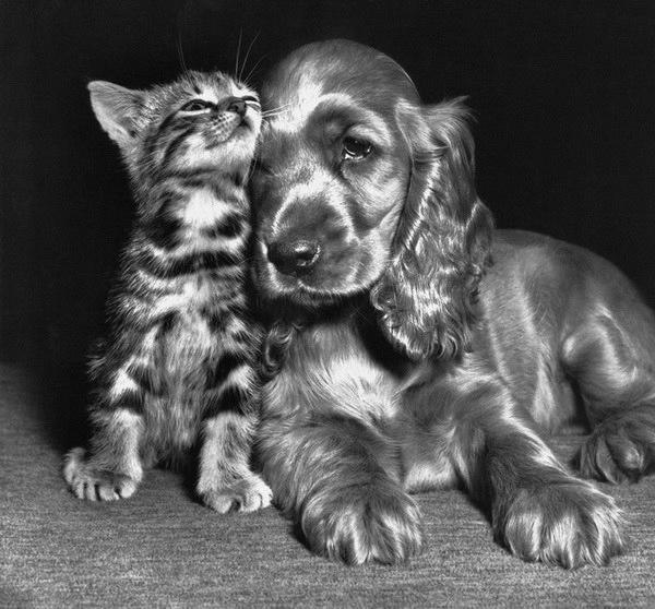 смешные фото кошек 6 (600x558, 153Kb)