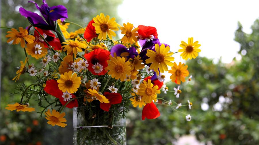 Название цветка по фото 2