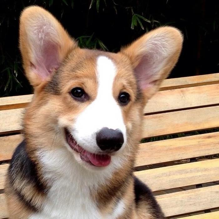 пес по кличке десмонд фото 3 (700x700, 287Kb)
