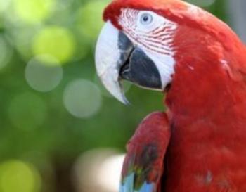Попугаи-телепаты (350x273, 50Kb)