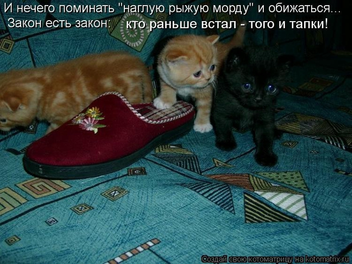 kotomatritsa_0X (700x524, 289Kb)