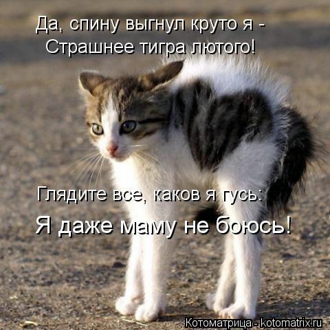 kotomatritsa_h5 (480x480, 114Kb)