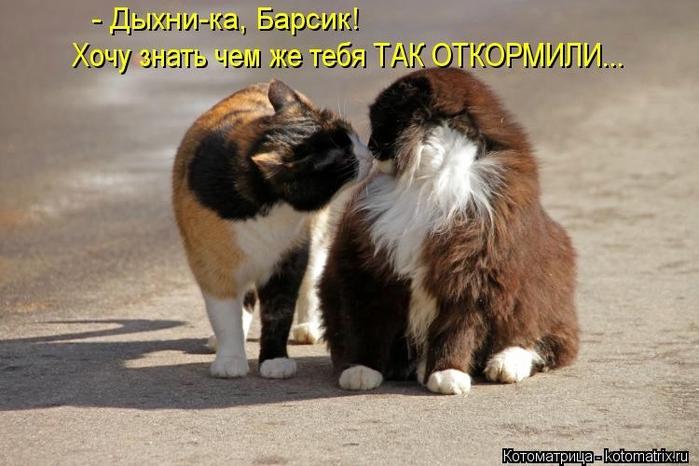 kotomatritsa_lB (700x466, 218Kb)