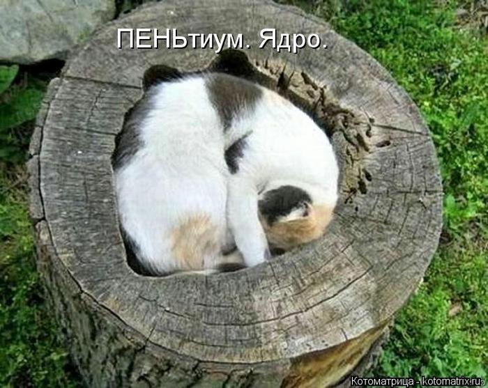 kotomatritsa_P (700x557, 282Kb)