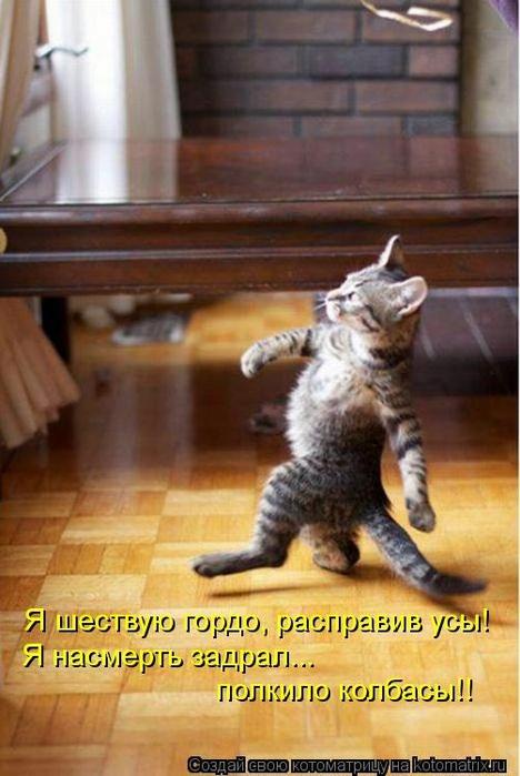 kotomatritsa_RL (468x700, 216Kb)