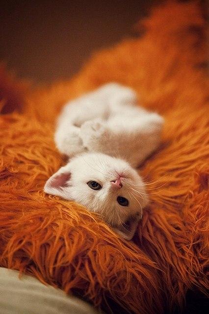 Сердечные кошки ну очень милая
