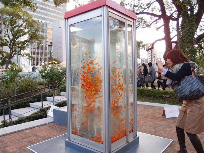 уличные аквариумы с золотыми рыбками япония 5 (700x525, 466Kb)