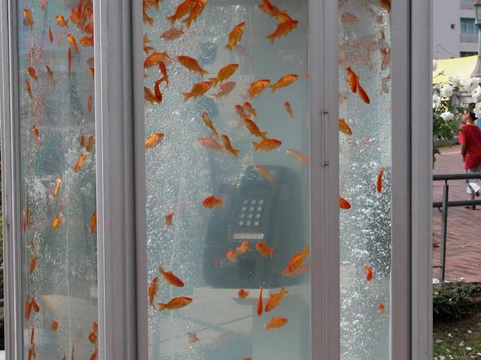 уличные аквариумы с золотыми рыбками япония 1 (680x510, 352Kb)