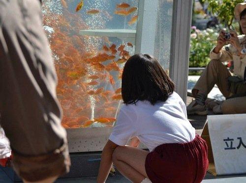 уличные аквариумы с золотыми рыбками япония 3 (500x373, 153Kb)