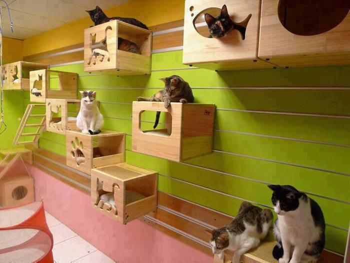 Спальное место для кошек своими руками