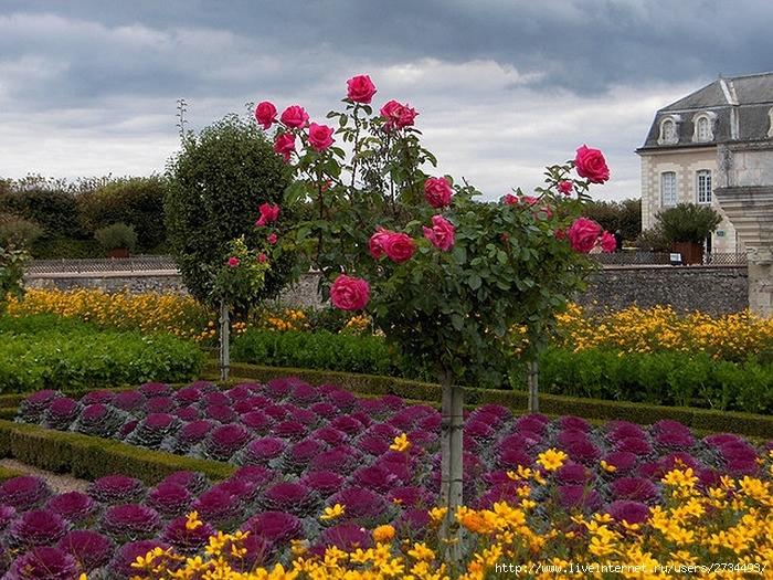 Сады замка Вилландри 3 (700x525, 367Kb)