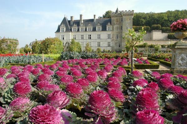 Сады замка Вилландри 6 (600x399, 173Kb)