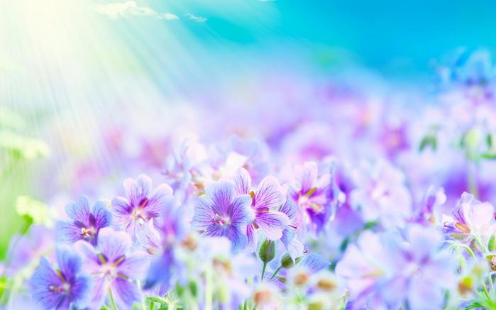 Танцующие цветы картинки 7