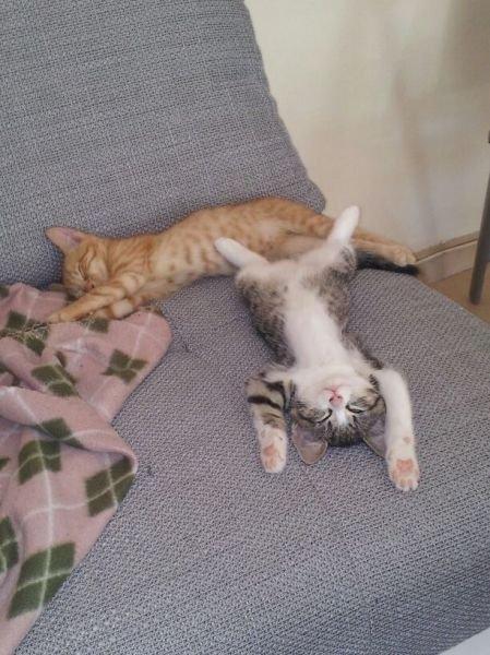 смешные фото кошек 8 (449x600, 155Kb)