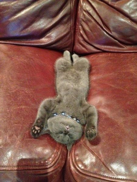 смешные фото кошек 9 (450x600, 144Kb)
