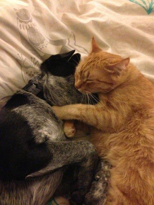 смешные фото кошек 13 (500x666, 178Kb)
