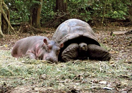невероятная дружба животных фото 1 (550x387, 200Kb)