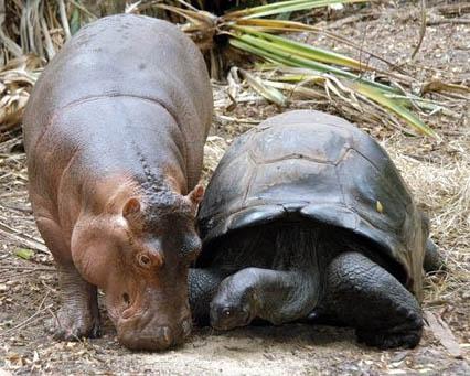 невероятная дружба животных фото 2 (426x341, 136Kb)