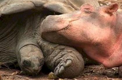 невероятная дружба животных фото 3 (420x275, 70Kb)