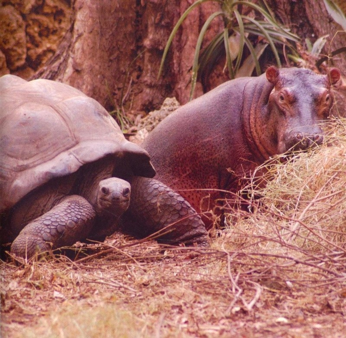 невероятная дружба животных фото 5 (700x682, 406Kb)
