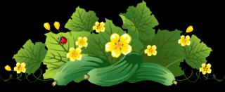ogur46 (Копировать) (320x131, 54Kb)